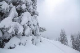 Snowboardtouren Allgäu - tief verschneite Landschaft